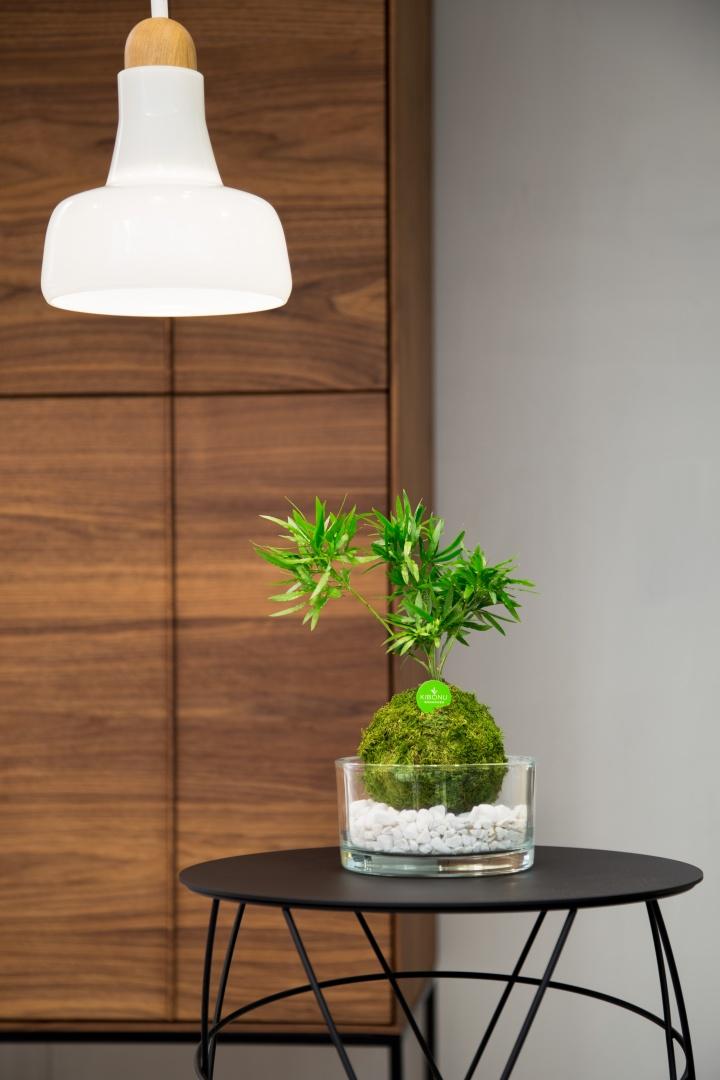 Indoor Gardening mit Kibonu